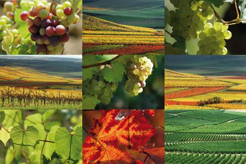 biospecial organic farming