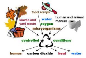 compost diagram