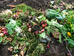 compost heap of waste food