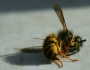 12 Million Bees Dead in Brevard County, Florida