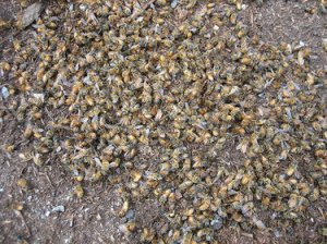dead_bees