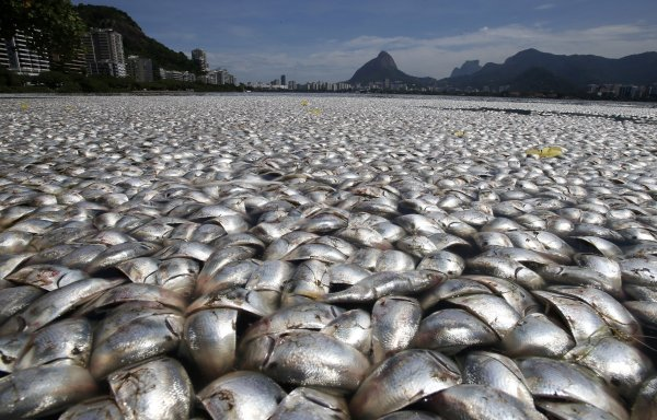 River of dead fishes