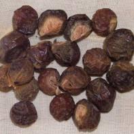 soapnuts01