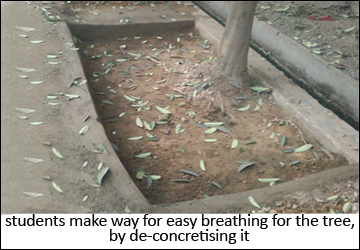 tree dechoked by student in delhi