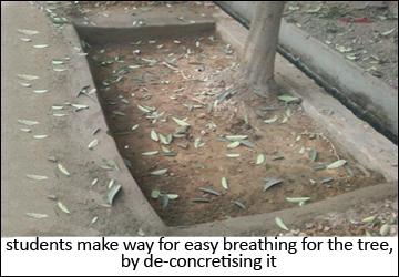 tree dechoked by student in delhi