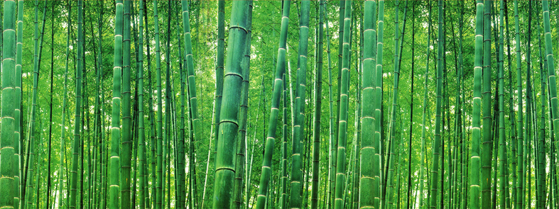 forest_bamboo