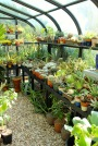 Why build your own Greenhouse ?