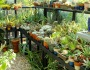 Why build your own Greenhouse?