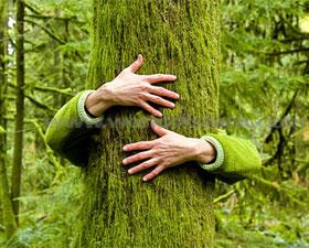 chipko-movement-tree-hugging