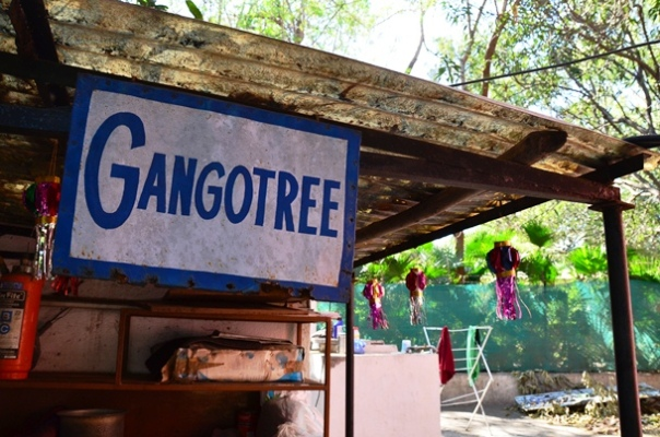 Gangotree