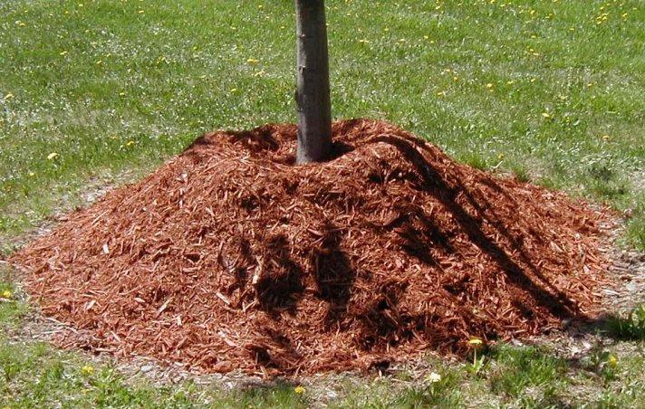 Mulching Guideline