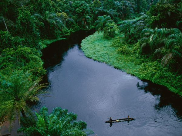The Congo Basin